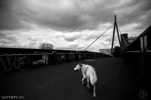The Bridge and the Dog