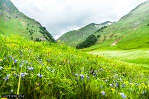 Blumenwiese bei der Fane Alm in Südtirol